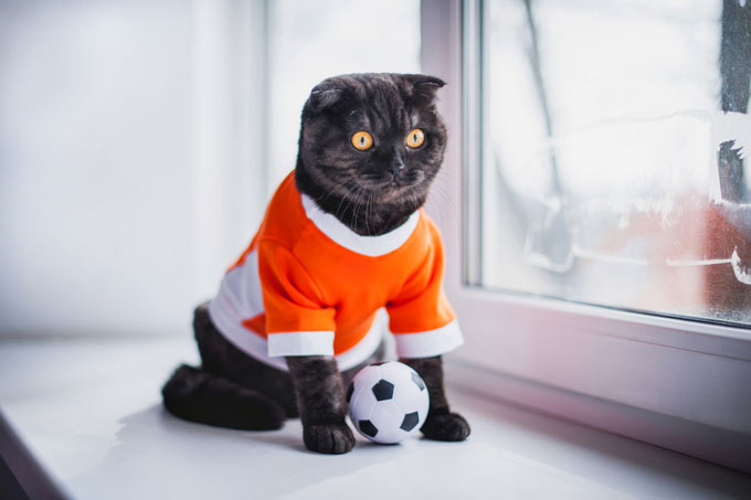 clothes for cats