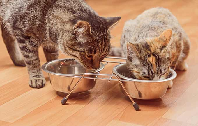foods-not-safe-for-cats