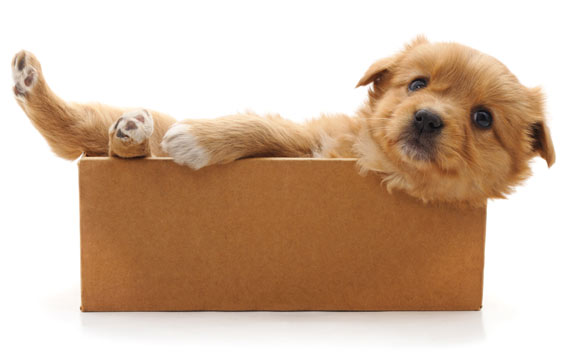 best dog box for puppies