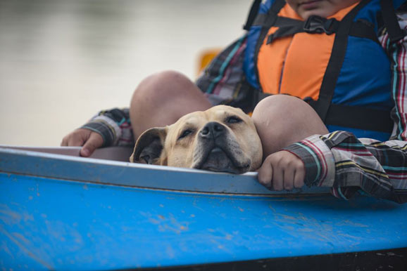 is kayaks safe for dog