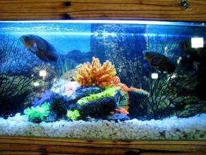 55-gallon-fish-tank