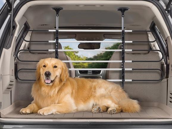 dog-safety-1