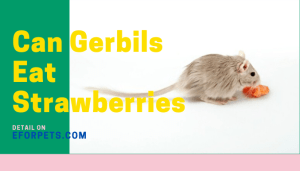 Can Gerbils Eat Strawberries
