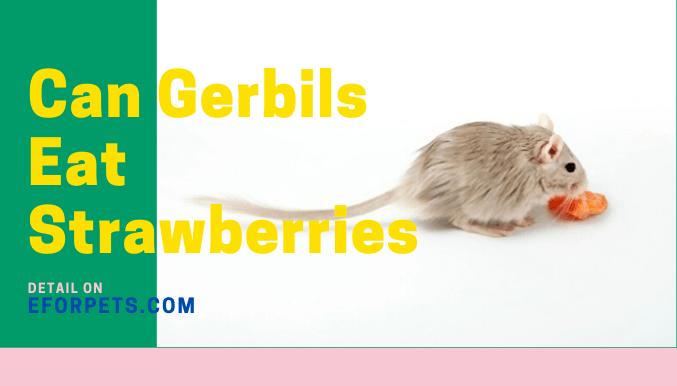 Can Gerbils Eat Strawberries