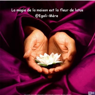Magie de la maison - fleur de lotus - silent sunday 54 Egalimère
