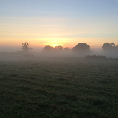 Tress in the Mist