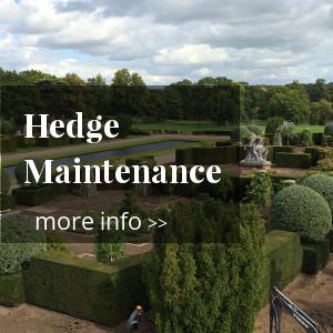 hedgecuting