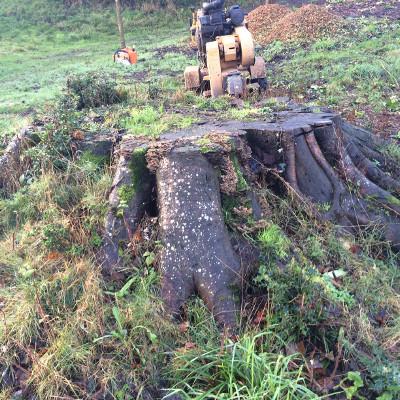 stump grinding shropshire