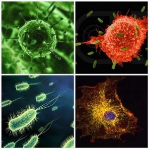 immunerősítő készítmények