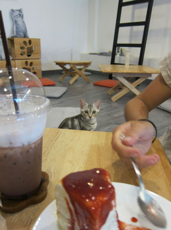 The Cat Cafe in Bangkok. There is only one kitty in this photo, but there were several prancing about the enclosed cafe. They also sell crepe cake, so it's win-win.