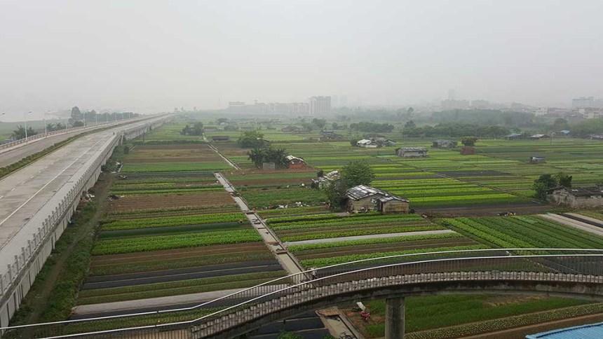 Zhaoqing to Gaoming