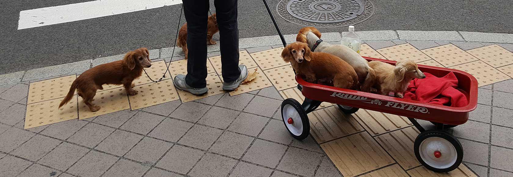 cycling Hokkaido, Japan