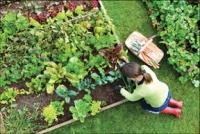 Starting an Organic Garden