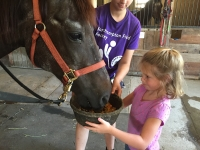 Feeding the horses at Camp FUN