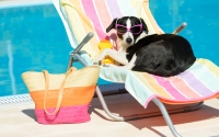 Get Ready for the Dog Days of Summer With a Brand New Pool!