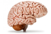 Tips to Stimulate the Senses of Seniors with Memory Impairment