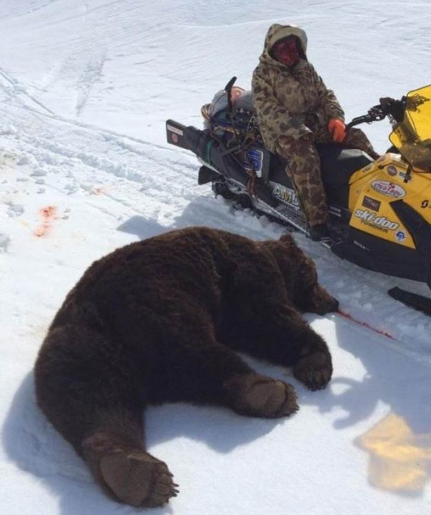 Wes Perkins on Snowmobile face missing and deadgrizzly bear