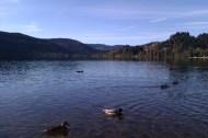 Le célèbre lac de Titisee. Dernière photo avant de grimper dans le train pour Stuttgart.