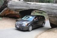 À la fin de l'année 1937, un séquoia haut de 84 m, probablement âgé de plus de 2000 ans, s'est abattu en travers de la Crescent Meadow Road. L'été suivant, le Log Tunnel fut creusé dans l'arbre et promu comme attraction touristique.
