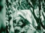 01 bushes ikaria