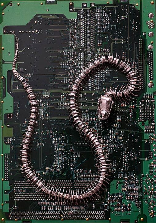 Modern-Fossils-and-Circuit-Board-by-Peter-McFarlane-17