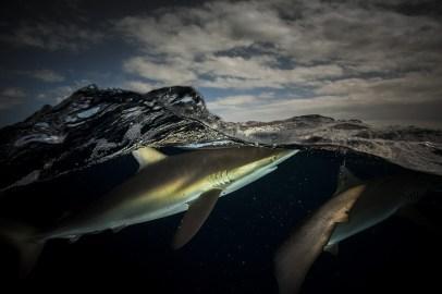 Below Sea Level-Requin