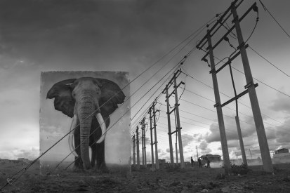 ELECTRIC-PYLONS-WITH-ELEPHANT