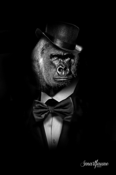 fantasmagorik-square-smart-faune-gorille