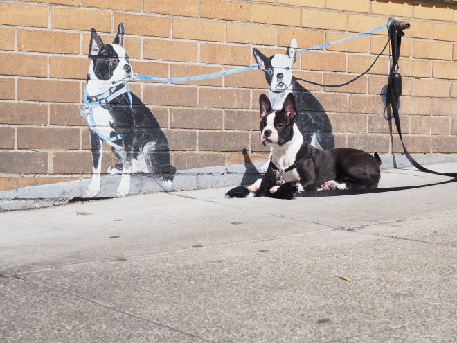 Dog mural from post Photo Walk in North Beach