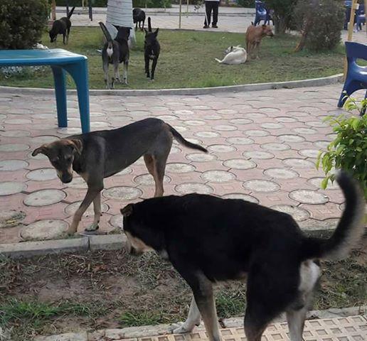 الكلاب الضاله فى نادى الشمس
