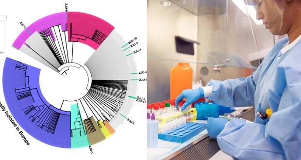 إختبارات سلالات فيروس كورونا