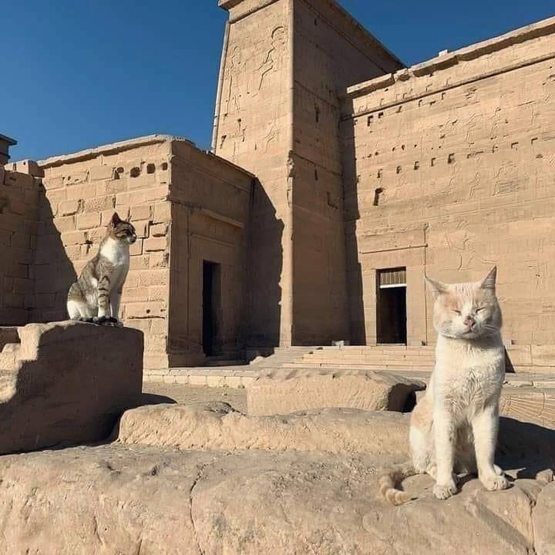 12 Photos of Cats Exploring Ancient Egypt | Egyptian Streets
