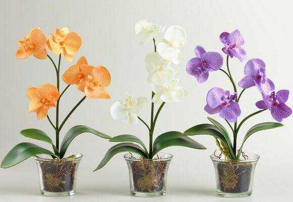Орхідеї види – Все виды орхидей с названиями, фото и ...
