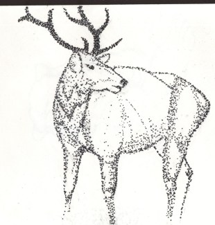 Elk stipple pen drawing