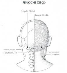 The Fengchi Point: For Tension Headache