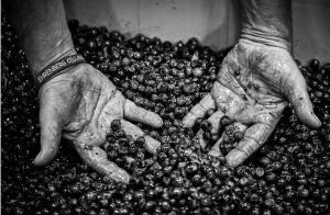 hands on grape