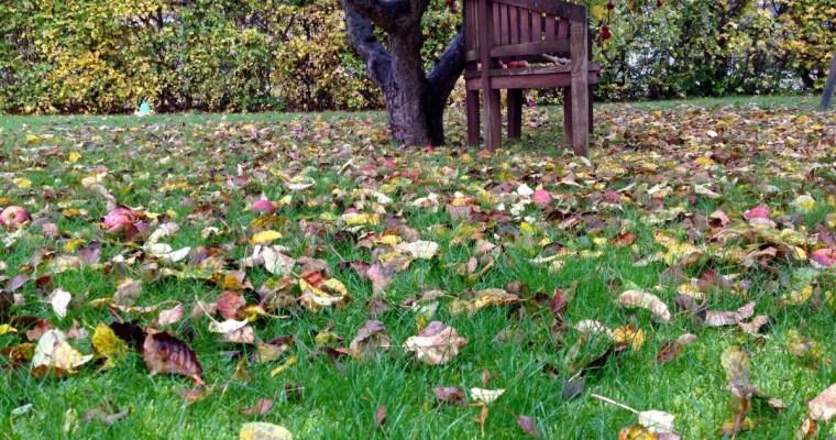 Haven en november dag