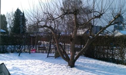IMAG0341