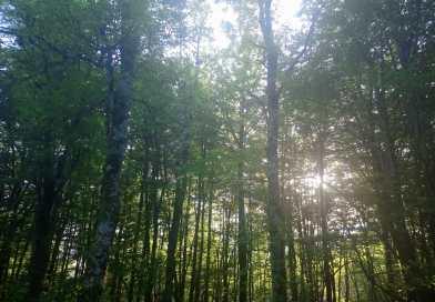 "[eiberri.eus] Eibar celebra el domingo el ""Zuhaitz eguna"" plantando 40 árboles autóctonos"