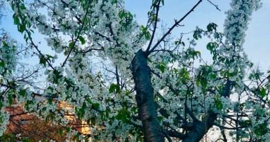 [eiberri.eus] Tiempo primaveral para el fin de semana