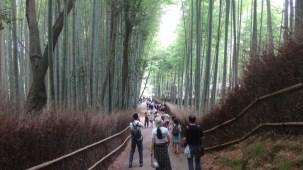 15-06-2016_kyoto_bamboo-grove_0