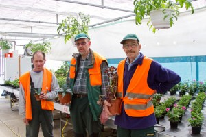 In den NEW-Gewächshäusern werden zurzeit die Blumen und Pflanzen für den Blumenmarkt gezogen. Bild: Tameer Gunnar Eden/Eifeler Presse Agentur/epa