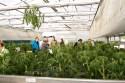 """Nicht nur Blühpflanzen, auch Tomaten aus dem eigenen Gewächshaus konnte man bei """"Blumen und mehr"""" kaufen. Bild: Tameer Gunnar Eden/Eifeler Presse Agentur/epa"""