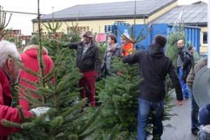 Frisch geschlagene Weihnachtsbäume gibt es alle Jahre wieder bei den NEW in Kuchenheim. Bild: NEW