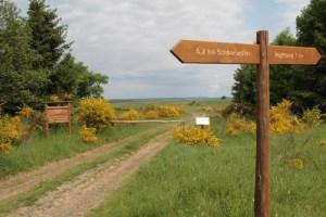 Zahlreiche Wanderwege locken auf der Dreiborner Hochfläche, die Ginsterblüte hautnah zu erleben. Bild: Michael Thalken/Eifeler Presse Agentur/epa