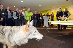 """Die """"Rückkehr des Wolfes nach NRW"""" war das Schwerpunktthema in der Kommunikation der Nationalparkverwaltung in 2018. Rund um die gleichnamige Ausstellung des NABU wurde Raum für Diskussionen zu den unterschiedlichen Sichtweisen geschaffen. Foto: A. Simantke/Nationalparkverwaltung Eifel"""