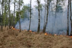 Die Waldbrandgefahr ist derzeit sehr hoch. Schon eine kleine Unachtsamkeit kann zur Katastrophe führen. Symbolfoto: Thomas-Hans Deckert / Wald und Holz NRW