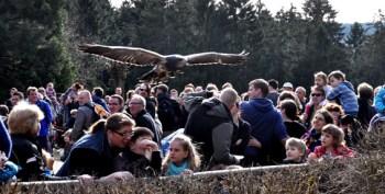 Kindergruppen von flutgeschädigten Familien sind vom Wildfreigehege Hellenthal zum kostenlosen Besuch eingeladen. Dort können sie - mit Abstand - spektakuläre Flüge der Greifvögel erleben. Archiv-Foto: Reiner Züll