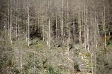 Schön sehen die Maßnahmen nicht immer aus, die im Nationalpark Eifel durchgeführt werden, aber warum sie dennoch nötig sind, dies möchte die Nationalparkverwaltung jetzt den Anwohnern erklären. Bild: Michael Thalken/Eifeler Presse Agentur/epa