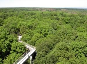 Der geplante Baumkronenpfad könnte ähnlich aussehen wie der im Nationalpark Hainich. Bild: Fritz Geller-Grimm/ Creative Commons